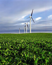 modern windmills in corn field
