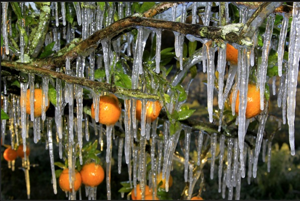 Oranges and icicles