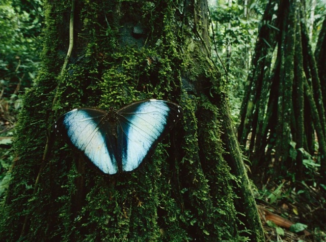 Butterfly and Trees, Madidi National Park, BoliviaPhotograph by Joel Sartore