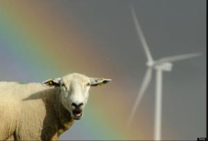 Wool - Wind - Weather